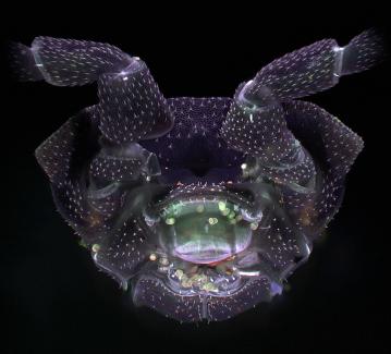 Diamond creature