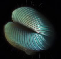 Fly proboscis