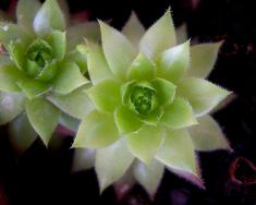 Growing symmetry