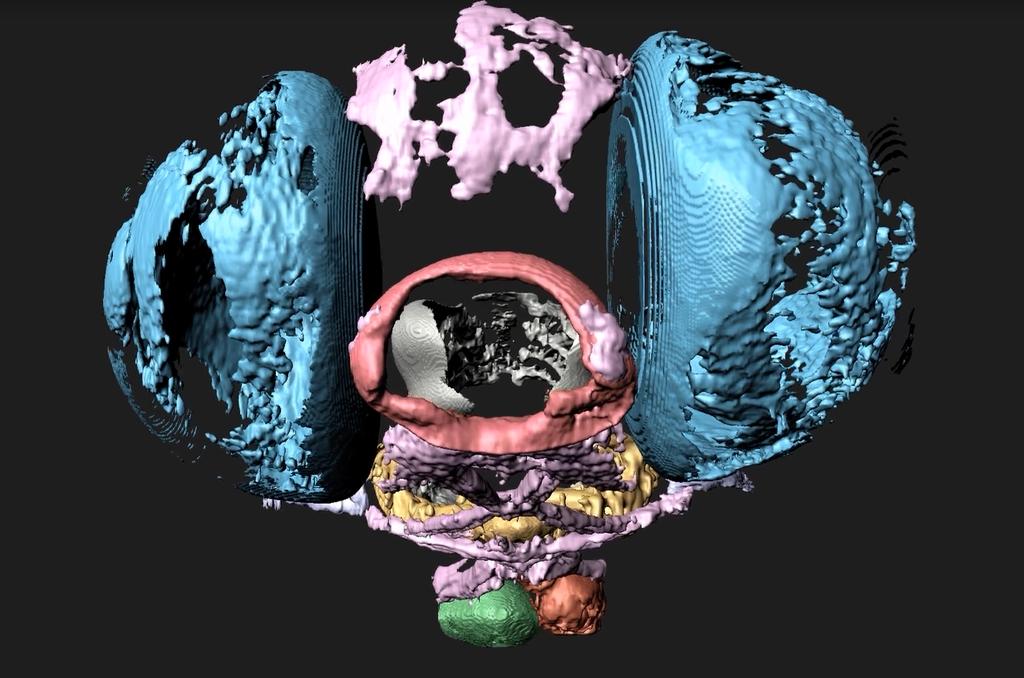 Zebrafish head 3D rendering
